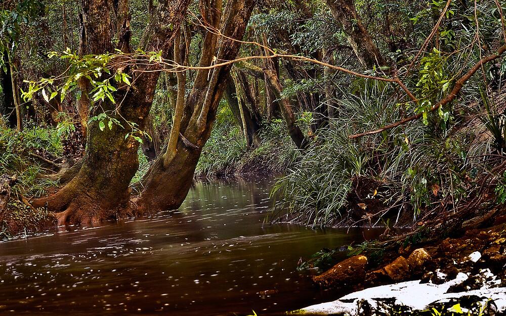 Creekhood by Elias