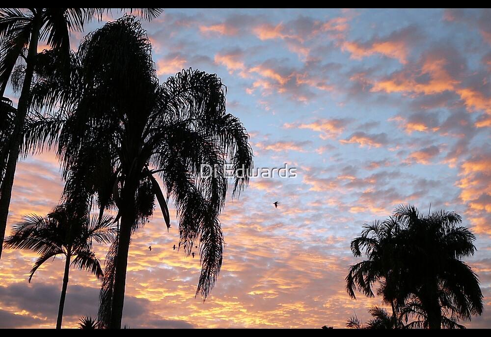 Flying at dawn by Di Edwards