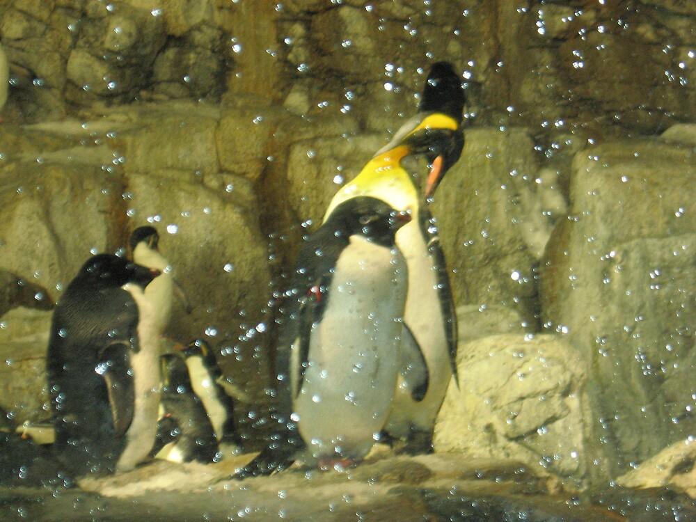 Penguins by Reeshia1230