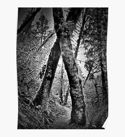 tree hugging Poster