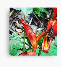 Camouflage for survival Canvas Print