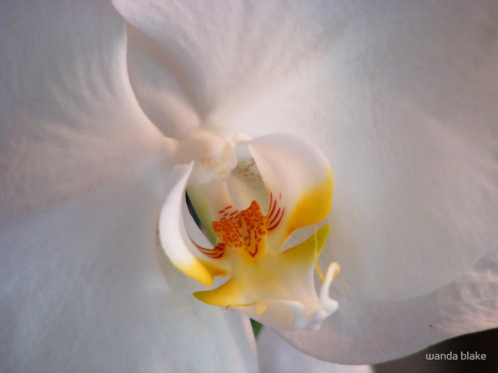 orchid by wanda blake