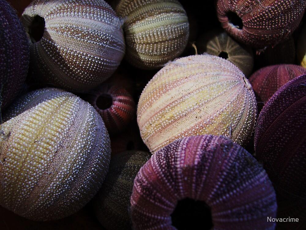 Urchin Soup by Novacrime