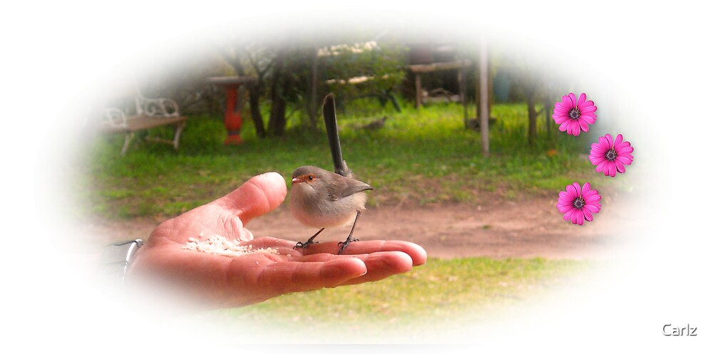 A Bird in the Hand Worth Two in the Bush by Carlz