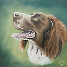 English Springer Spaniel by cjwaterfield