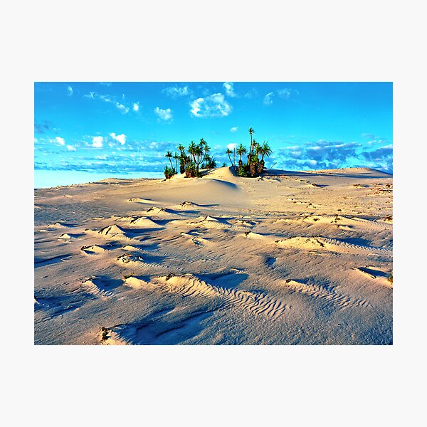 Sandforms and Pandanus Stand, Cape Leveque Photographic Print