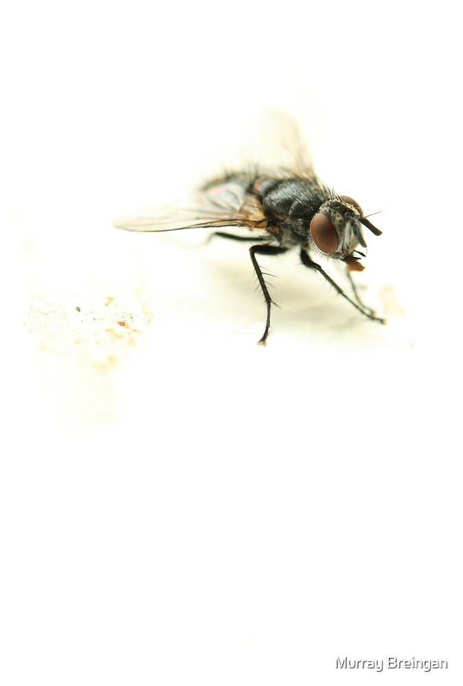 The Fly by Murray Breingan