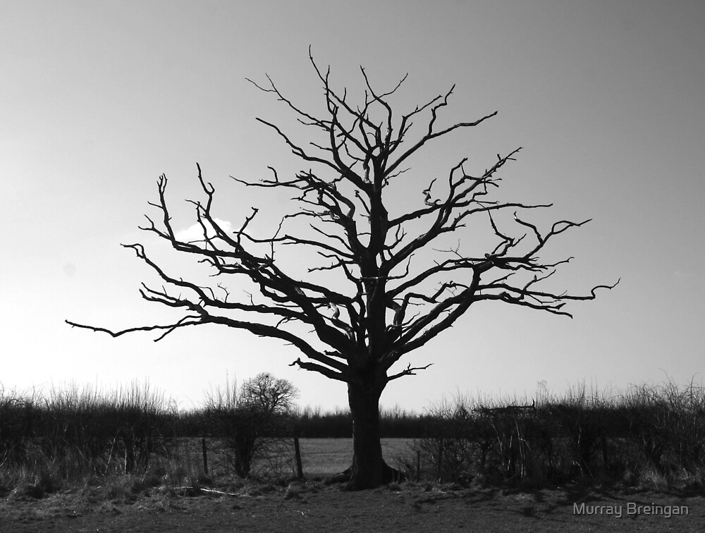 The dead Tree by Murray Breingan