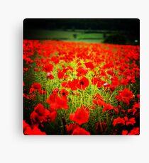 Flanders field Canvas Print