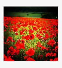 Flanders field Photographic Print