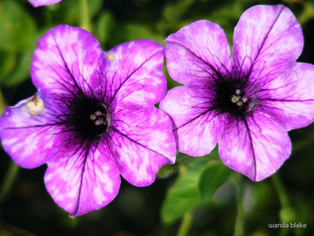 purple duo by wanda blake