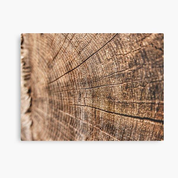 Sawn Log Metal Print