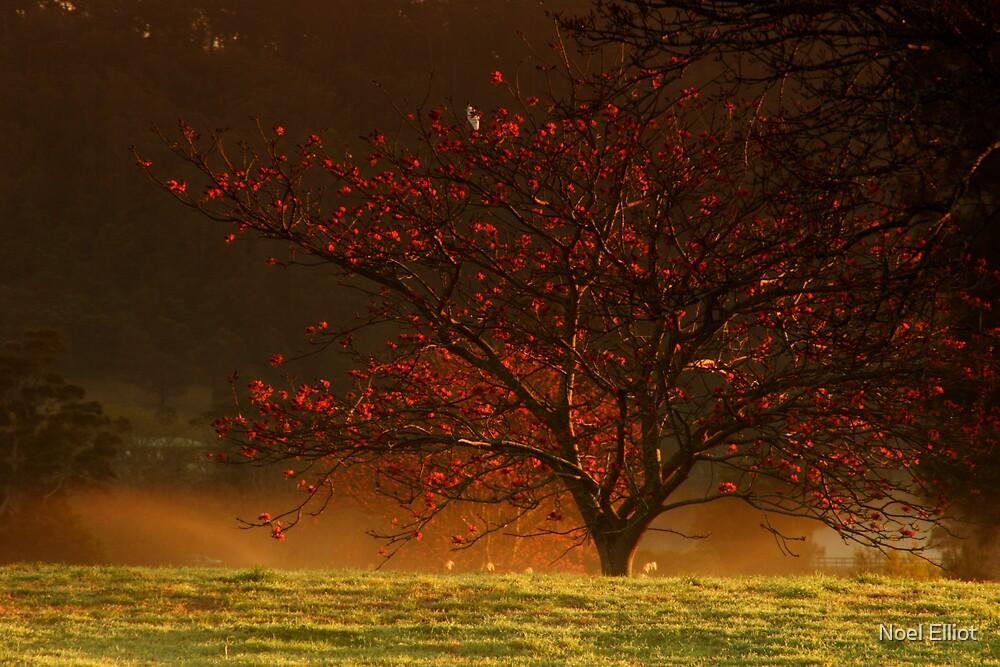 Terrara Tree by Noel Elliot