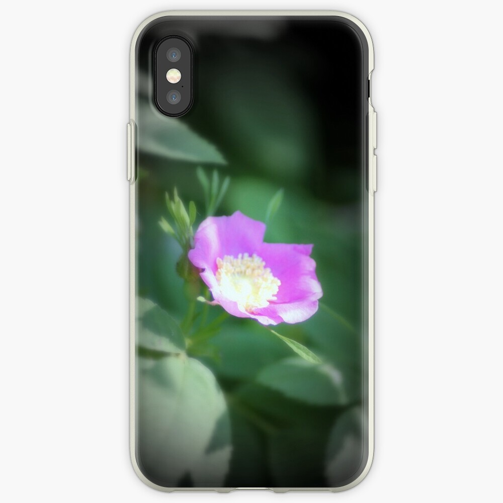 Old fashioned pink rose, near Trojan pond, Oregon iPhone Case & Cover