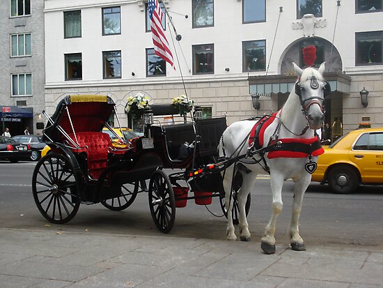 horse carriage by monicamona