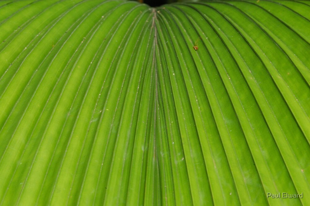 Palm Leaf by Paul Elward