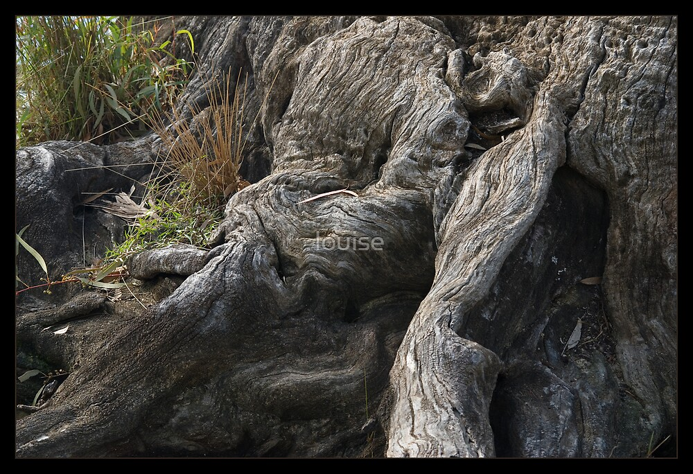 GNARLY TRUNK by louise