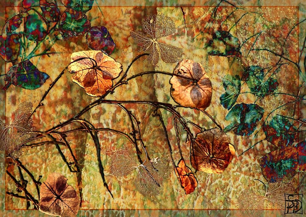 Spent Blooms by Sabine Spiesser