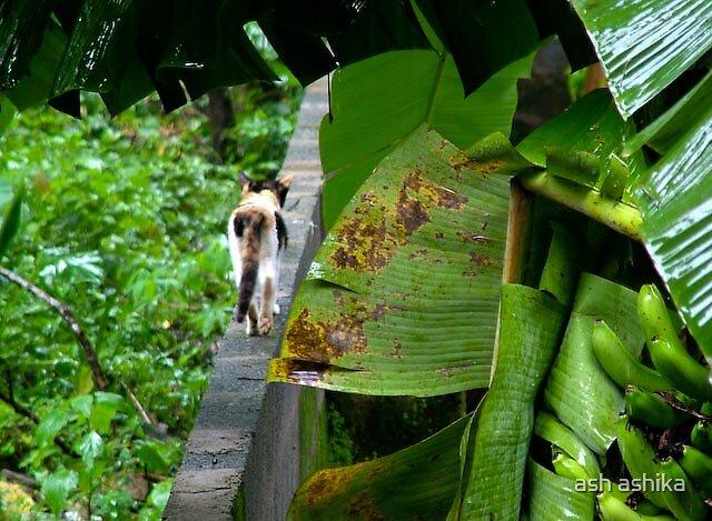 a cat walking away by ash ashika