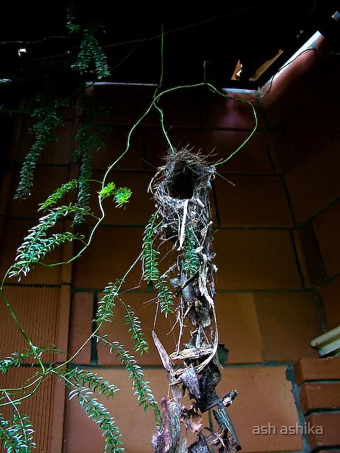 her nest by ash ashika