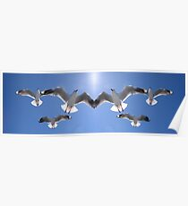 Heavenly Silver Gulls Poster