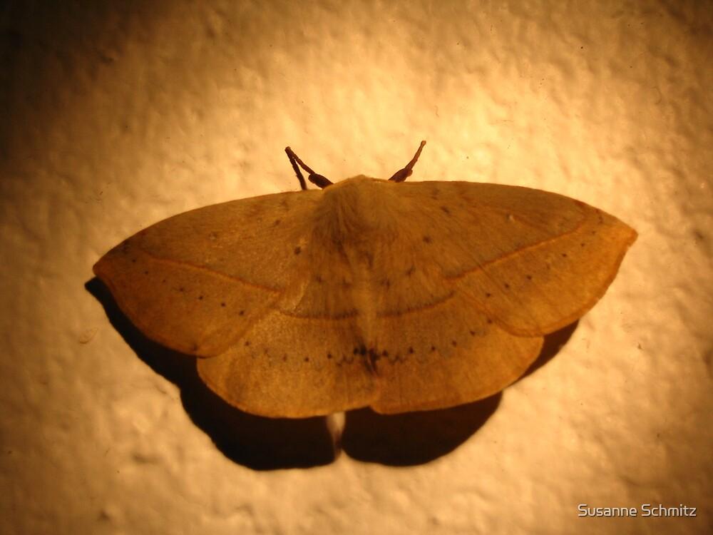 beautiful moth - Queensland, Australia by Susanne Schmitz