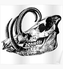 Boar skull Poster