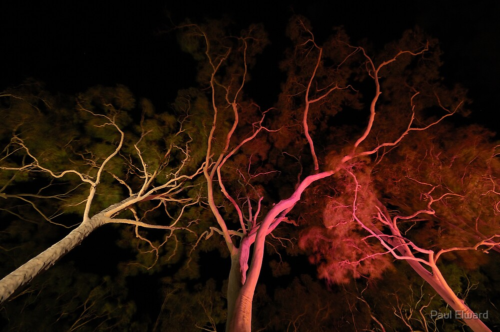 Ghost Trees by Paul Elward