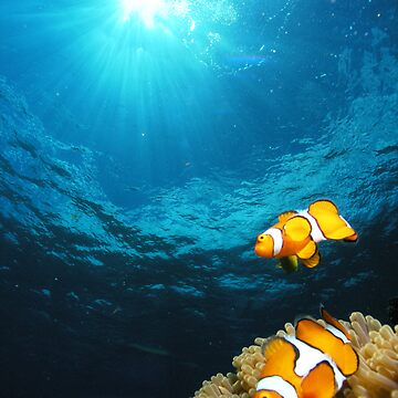 clownfish - great barrier reef - Cairns, Australia by sanne424