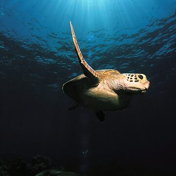 sea turtle - great barrier reef - Cairns, Australia by sanne424