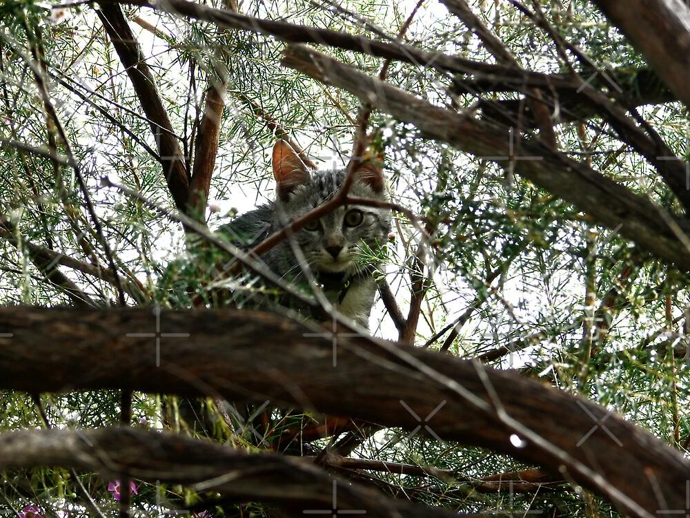 Wet kitten up a tree by Sandra Chung