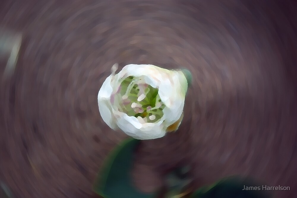 Swirling Blossom by James Harrelson