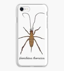 NZ native animals - weta  iPhone Case/Skin