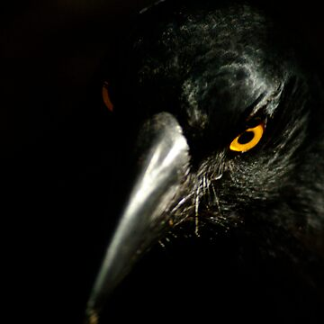 The Crow by WayneD