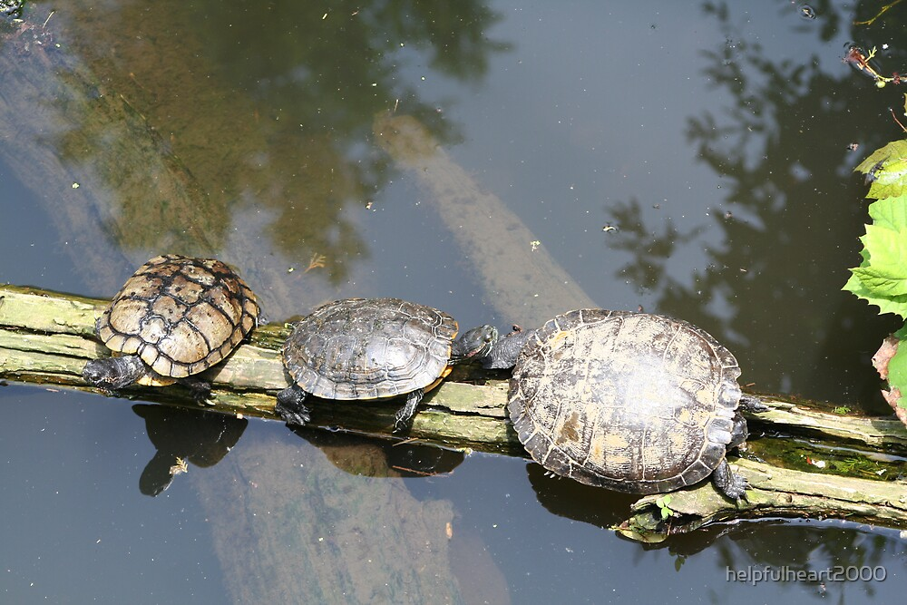 Three Turtles on a log by helpfulheart2000