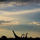 Giraffe Silhouette - Epic Sky and Freedom by LivingWild
