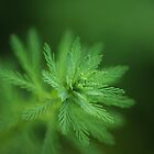 Feathery leaves by AnnaKT