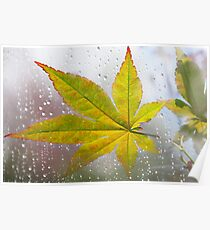 Maple Leaf in Autumn Day Poster