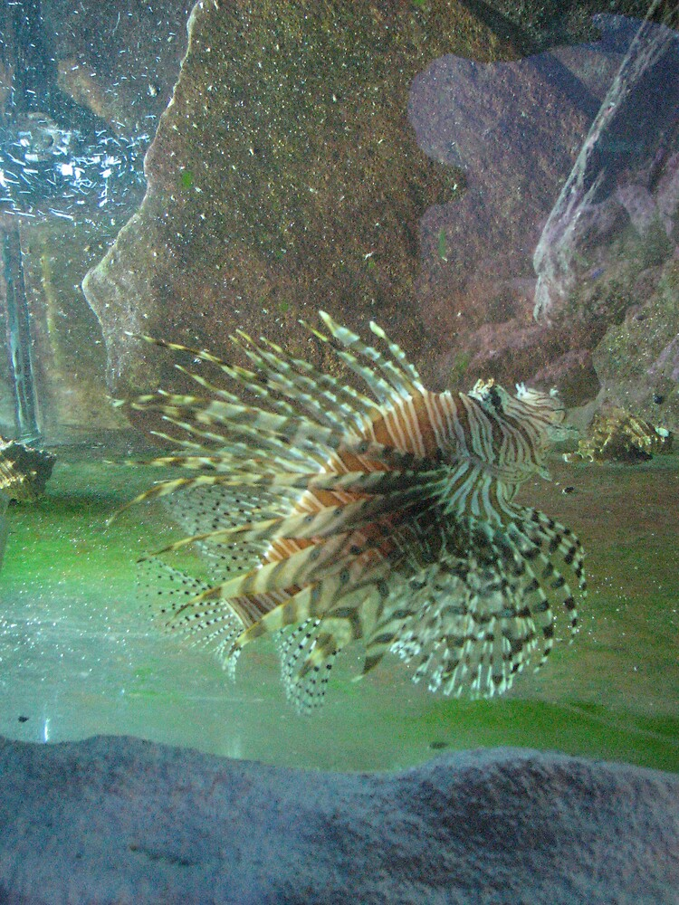 Lion Fish by IndyLady