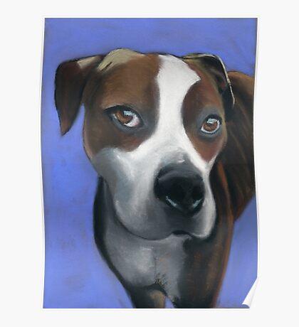 Athena dog portrait Poster