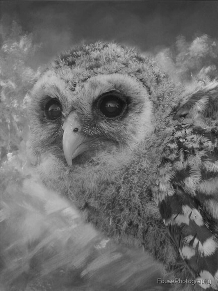 Hootie the Baby Owl by FousePhotography
