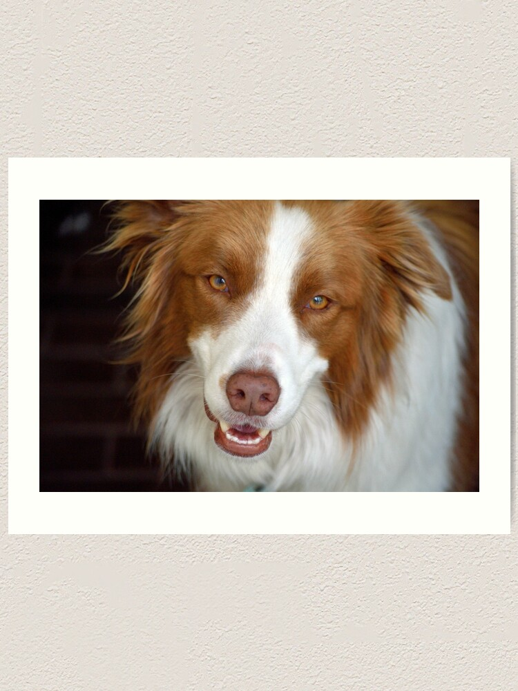 Alternate view of Beautiful Border Collie Art Print