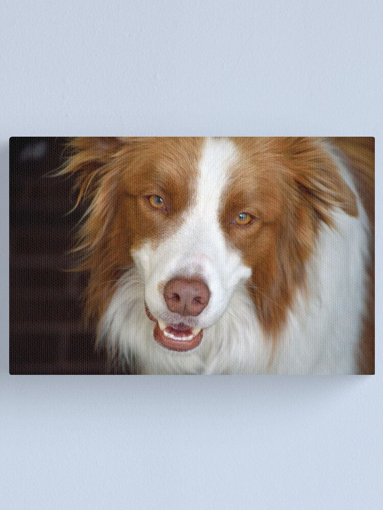 Alternate view of Beautiful Border Collie Canvas Print