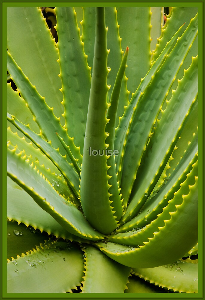 SUCCULENT by louise