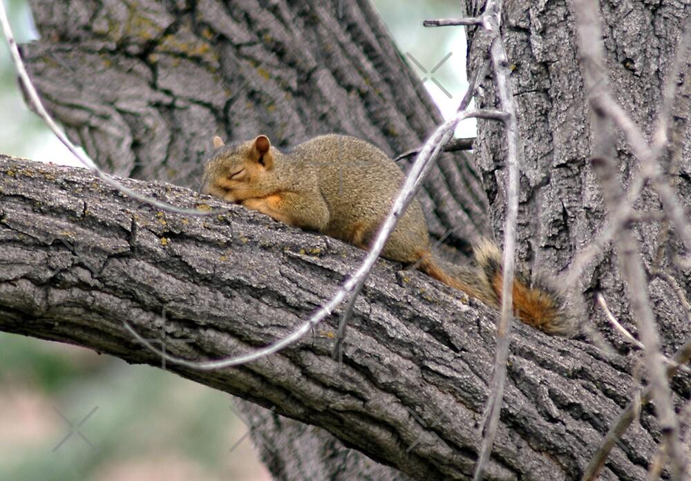 Sleeping Squirrel by Holly Werner
