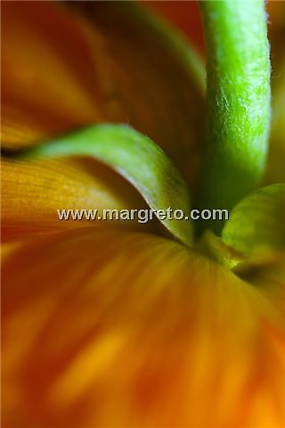 Flower Macro by margreto