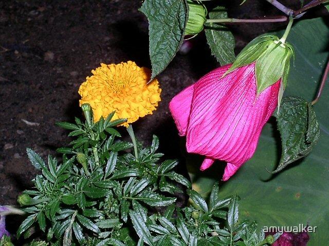 Spring Flowers by amywalker