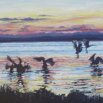 Pelicans on Tuggerah Lake at Sunset by beryl