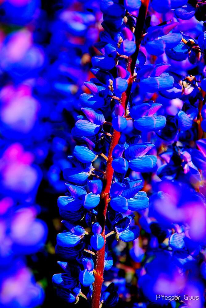 Lake Tekapo Flowers by Gus Buckner