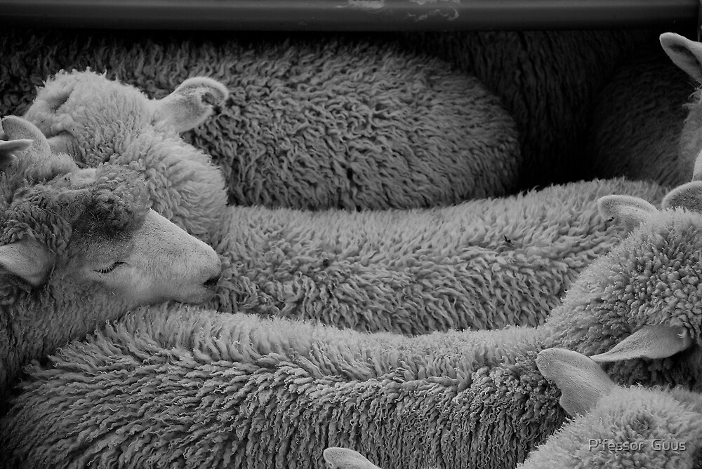 counting sleeping sheep by P'fessor  Guus